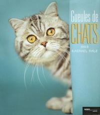 Rachael Hale - Gueules de chats.