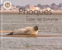 Régis Delcourt - Phoques en baie de Somme.