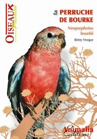 Rémi Vesque - La perruche de Bourke.