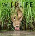 Rosamund Kidman Cox - Wildlife Photographer of the year - Les plus belles photos de nature.