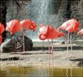 Sepp - 3 Puzzles magnétiques oiseaux.