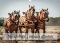 Alain Gaymard - Agriculture, images d'antan (Calendrier mural 2020 DIN A3 horizontal) - Des images qui restent dans nos mémoires (Calendrier mensuel, 14 Pages ).