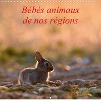 Henry Ausloos - CALVENDO Animaux  : Bébés animaux de nos régions (Calendrier mural 2021 300 × 300 mm Square) - L'insouciance des bébés animaux photographiés sur le vif. (Calendrier mensuel, 14 Pages ).