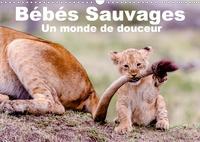 Michel Hagège - CALVENDO Animaux  : Bébés sauvages - Un monde de douceur (Calendrier mural 2020 DIN A3 horizontal) - Bébés mamifères dans leur environnement naturel (Calendrier mensuel, 14 Pages ).