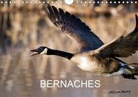 Philippe Henry - BERNACHES (Calendrier mural 2020 DIN A4 horizontal) - Les quatre saisons de la Bernache du Canada (Calendrier mensuel, 14 Pages ).