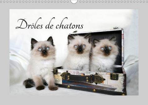 Drôles de chatons (Calendrier mural 2020 DIN A3 horizontal). Ils vous donneront le sourire (Calendrier mensuel, 14 Pages )