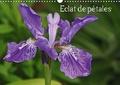 Patrick Cannaux - Eclat de pétales (Calendrier mural 2020 DIN A3 horizontal) - Les fleurs embellissent nos journées (Calendrier mensuel, 14 Pages ).