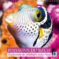 Calvendo Verlag GmbH - Explosion de couleurs sous la mer : poissons du récif - Poissons et coraux.