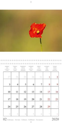 Fleurs sauvages méditerranéennes (Calendrier mural 2020 300 × 300 mm Square). Un calendrier avec une fleur sauvage pour chaque mois de l'année. (Calendrier mensuel, 14 Pages )