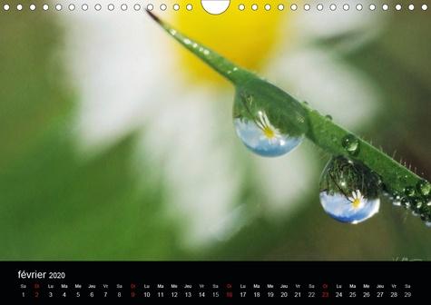 Gouttes de fleurs (Calendrier mural 2020 DIN A4 horizontal). Photos macro de gouttes de fleurs (Calendrier mensuel, 14 Pages )