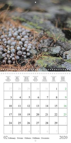Instants Naturels (Calendrier mural 2020 300 × 300 mm Square). Instants Naturels : Laissez-vous envoûter par le monde magique de notre nature. (Calendrier mensuel, 14 Pages )