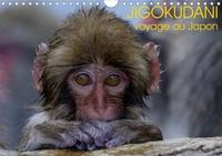 Michel Hagège - JIGOKUDANI voyage au Japon (Calendrier mural 2020 DIN A4 horizontal) - Un voyage à travers de magnifiques portraits de macaques japonais (Calendrier mensuel, 14 Pages ).