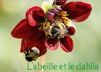 Daniel Illam - L'abeille et le dahlia (Calendrier mural 2020 DIN A3 horizontal) - Le dahlia et l'abeille en parfaite symbiose. (Calendrier mensuel, 14 Pages ).