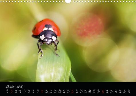 L'année des petits mondes (Calendrier mural 2020 DIN A3 horizontal). À la découverte des insectes du jardin (Calendrier mensuel, 14 Pages )