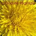 Didier Sibourg - La beauté végétale (Calendrier mural 2020 300 × 300 mm Square) - La nature est belle, préservons-la. (Calendrier mensuel, 14 Pages ).