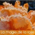 Beate Vogl - La magie de la rose (Calendrier mural 2020 300 × 300 mm Square) - De magnifiques roses lumineuses, de variétés et de couleurs différentes. (Calendrier mensuel, 14 Pages ).