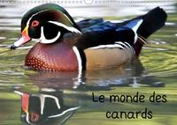 Patrick Casaert - Le monde des canards (Calendrier mural 2020 DIN A3 horizontal) - A la découverte des canards du monde entier (Calendrier mensuel, 14 Pages ).