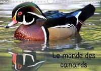 Patrick Casaert - Le monde des canards (Calendrier mural 2020 DIN A4 horizontal) - A la découverte des canards du monde entier (Calendrier mensuel, 14 Pages ).