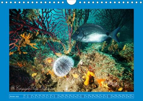 Le monde sous marin de Méditerranée (Calendrier mural 2020 DIN A4 horizontal). Les merveilles de la Méditerranée (Calendrier mensuel, 14 Pages )