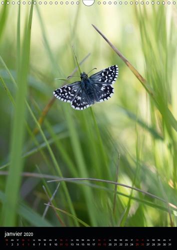 Lépidoptères de la forêt de Fontainebleau (Calendrier mural 2020 DIN A3 vertical). Partez à la découverte de 12 magnifiques papillons de la forêt de Fontainebleau (Calendrier mensuel, 14 Pages )