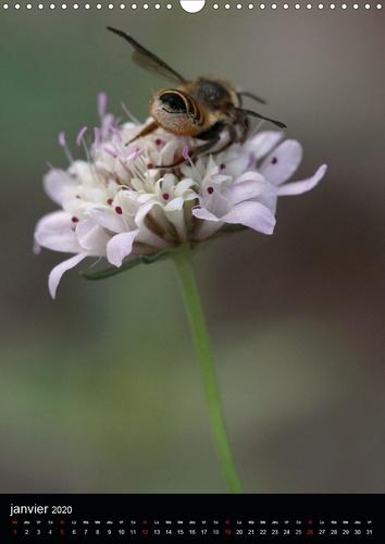 Les abeilles et bourdons de Provence (Calendrier mural 2020 DIN A3 vertical). Nos amis les abeilles et les bourdons solitaires et sauvages (Calendrier mensuel, 14 Pages )