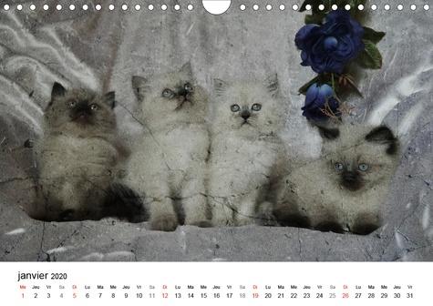 Les Chats de nos grands-mères (Calendrier mural 2020 DIN A4 horizontal). Merveilleuses photos qui rappellent l'heureux ancien temps. (Calendrier mensuel, 14 Pages )