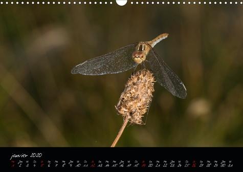 Les insectes audois (Calendrier mural 2020 DIN A3 horizontal). Photographies d'insectes du département de l'Aude (Calendrier mensuel, 14 Pages )