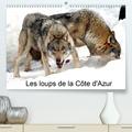 Alain Hanel - Les loups de la Côte d'Azur (Calendrier supérieur 2020 DIN A2 horizontal) - Un parc à loups a été créé dans le Mercantour et a accueilli ses premiers loups venant de la République Tchèque en 2005. J'ai suivi et photographié l'évolution du Centre des Loups jusqu'en 2013. (Calendrier mensuel, 14 Pages ).