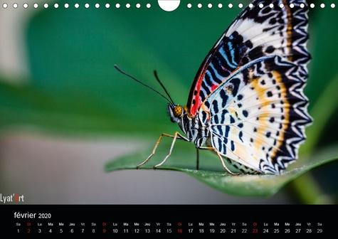 Les papillons exotiques (Calendrier mural 2020 DIN A4 horizontal). Calendrier mensuel de 14 pages dédié aux  majestueux papillons (Calendrier mensuel, 14 Pages )