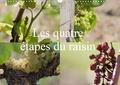 Daniel Illam - Les quatre étapes du raisin (Calendrier mural 2020 DIN A3 horizontal) - Le raisin, le nectar des Dieux (Calendrier mensuel, 14 Pages ).