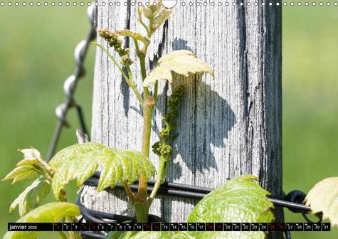 Les quatre étapes du raisin (Calendrier mural 2020 DIN A3 horizontal). Le raisin, le nectar des Dieux (Calendrier mensuel, 14 Pages )