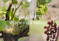 Daniel Illam - Les quatre étapes du raisin (Calendrier mural 2020 DIN A4 horizontal) - Le raisin, le nectar des Dieux (Calendrier mensuel, 14 Pages ).