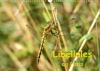 Patrick Casaert - Libellules au Pâtis (Calendrier mural 2020 DIN A3 horizontal) - Rencontre avec des libellules dans le parc naturel du Pâtis (Calendrier mensuel, 14 Pages ).