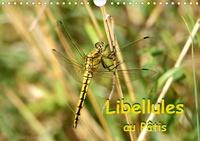 Patrick Casaert - Libellules au Pâtis (Calendrier mural 2020 DIN A4 horizontal) - Rencontre avec des libellules dans le parc naturel du Pâtis (Calendrier mensuel, 14 Pages ).