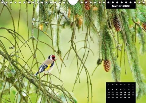 Merveilleux oiseaux du quotidien (Calendrier mural 2020 DIN A4 horizontal). Le quotidien offre tant de merveilles naturelles au travers des oiseaux du jardin. (Calendrier mensuel, 14 Pages )