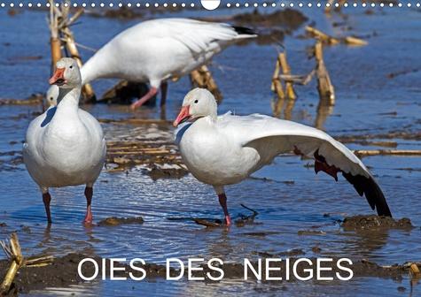 OIES DES NEIGES (Calendrier mural 2020 DIN A3 horizontal). Emblème du grand nord canadien (Calendrier mensuel, 14 Pages )