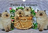Sylvia Saüme - Pattes de velours (Calendrier mural 2020 DIN A4 horizontal) - Séance photos de chatons (Calendrier mensuel, 14 Pages).
