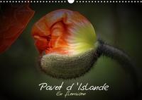 Thierry Brillard - Pavot d'Islande en floraison (Calendrier mural 2020 DIN A3 horizontal) - Le pavot d'Islande depuis le bouton jusqu'à la floraison (Calendrier mensuel, 14 Pages ).