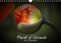 Thierry Brillard - Pavot d'Islande en floraison (Calendrier mural 2020 DIN A4 horizontal) - Le pavot d'Islande depuis le bouton jusqu'à la floraison (Calendrier mensuel, 14 Pages ).