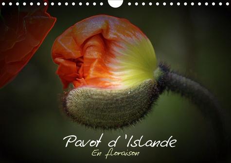 Pavot d'Islande en floraison (Calendrier mural 2020 DIN A4 horizontal). Le pavot d'Islande depuis le bouton jusqu'à la floraison (Calendrier mensuel, 14 Pages )
