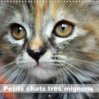 Jennifer Chrystal - Petits chats très mignons (Calendrier mural 2020 300 × 300 mm Square) - Photos fascinantes des tigres de salon prises en gros plan. (Calendrier mensuel, 14 Pages ).