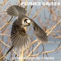 Philippe Henry - PLUMES GRISES - LE MÉSANGEAI DU CANADA (Calendrier mural 2020 300 × 300 mm Square) - Rencontre avec le mésangeai du Canada (Calendrier mensuel, 14 Pages ).