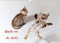 Christof Dardenne - Quelle vie de chats (Calendrier mural 2020 DIN A3 horizontal) - Chats et chatons (Calendrier mensuel, 14 Pages ).