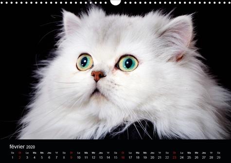 Quelle vie de chats (Calendrier mural 2020 DIN A3 horizontal). Chats et chatons (Calendrier mensuel, 14 Pages )