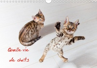 Christof Dardenne - Quelle vie de chats (Calendrier mural 2020 DIN A4 horizontal) - Chats et chatons (Calendrier mensuel, 14 Pages ).