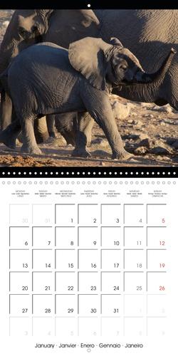 Sur les pistes namibiennes (Calendrier mural 2020 300 × 300 mm Square). La Namibie en 12 photos (Calendrier mensuel, 14 Pages )