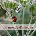 Didier Sibourg - CALVENDO Animaux  : Un monde d'insectes (Calendrier mural 2021 300 × 300 mm Square) - Bienvenue dans le petit monde des insectes. (Calendrier mensuel, 14 Pages ).