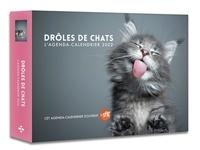 Sophie Le Flour et Mahaut Caron - Drôles de chats.