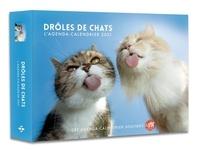 Sophie Le Flour - L'agenda-calendrier Drôles de chats.