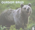 Staffan Widstrand - Ourson brun.